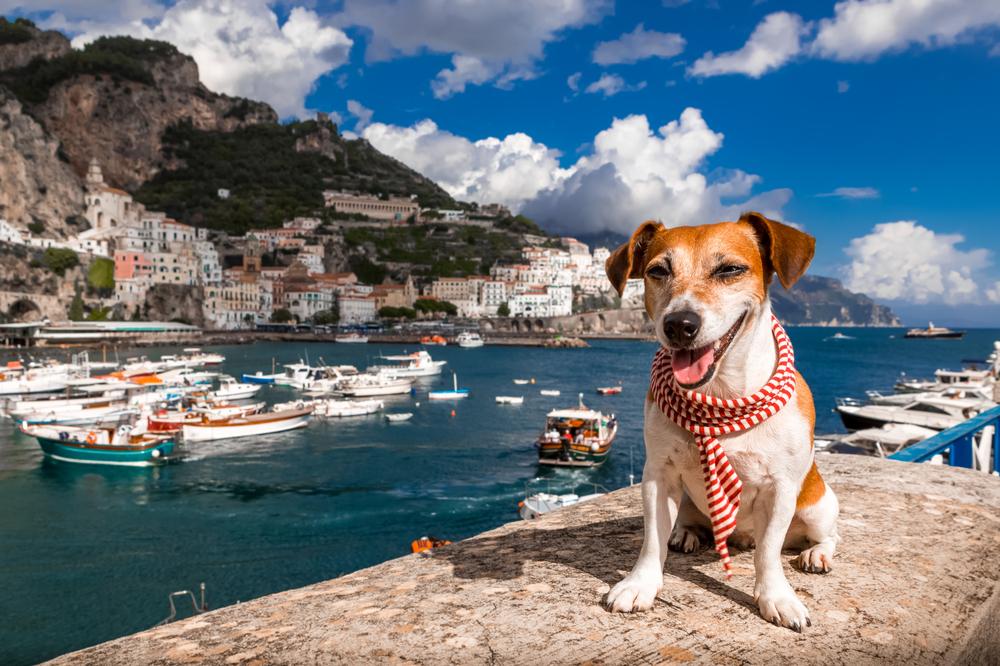Die 5 Besten Hotels Mit Hund In Gardasee